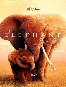 مستند The Elephant Queen 2019