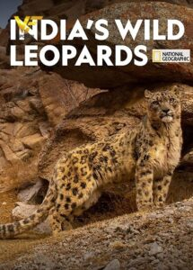 دانلود مستند پلنگ های وحشی هند India's Wild Leopards 2020